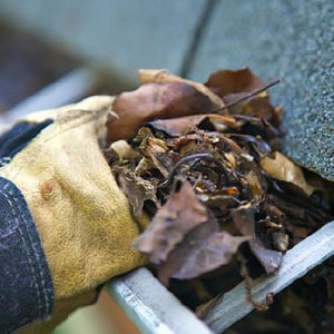 Removing Leaves by Hand