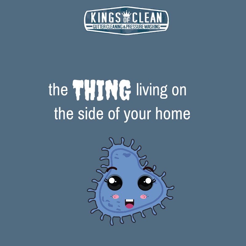 The Thing Living on the Side of Your Home